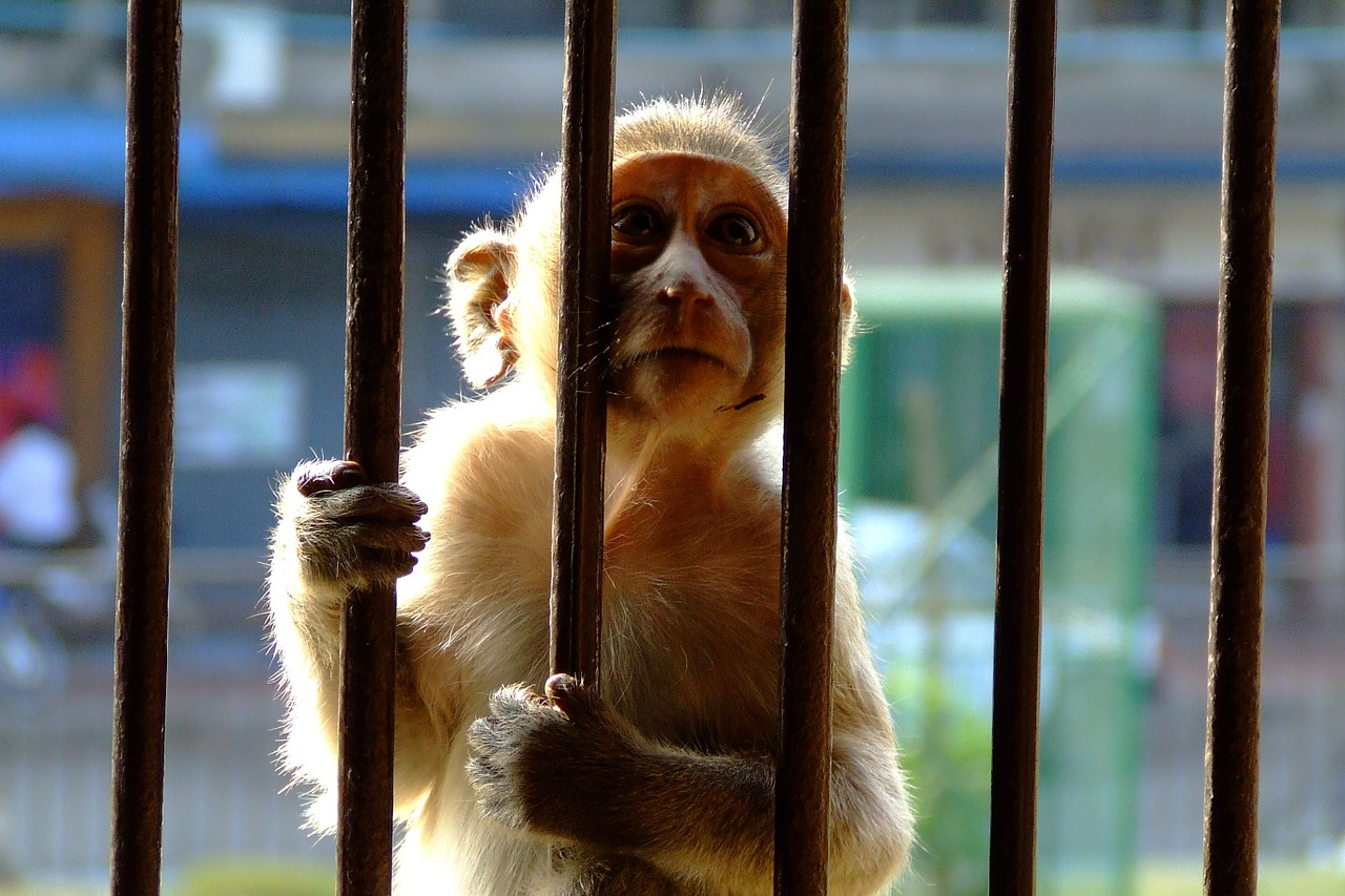 How Ending Wildlife Trade Can Prevent Pandemics